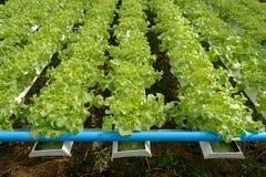 hydroponics Стоковые Фото