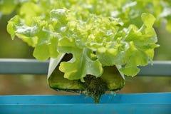 hydroponics Fotografering för Bildbyråer