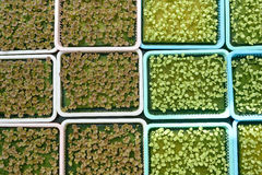 hydroponics Στοκ εικόνες με δικαίωμα ελεύθερης χρήσης