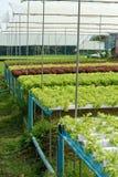 hydroponics Στοκ φωτογραφία με δικαίωμα ελεύθερης χρήσης
