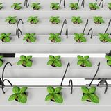 Hydroponic Growing System with Independent Water Tank. Hydroponics & Aeroponics sistem uses modular stackable growing pots. Vertical hydroponics garden growing Royalty Free Stock Photos