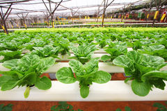 Hydroponics agriculture - Series 2 Royalty Free Stock Image