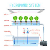 Hydroponics Colored Infographic Royalty Free Stock Image