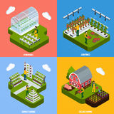 Hydroponics Concept Icons Set Royalty Free Stock Image