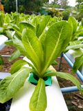 Hydroponics farm in country. The hydroponics plant at organic farmland in countryside Stock Photo