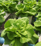 Hydroponics farm Stock Images