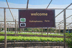Hydroponics farm in greenhouse at Corofield. Royalty Free Stock Image