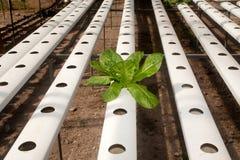 Hydroponics farm in greenhouse at Corofield, Thailand. Stock Photos