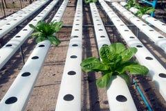Hydroponics farm in greenhouse at Corofield, Thailand. Stock Image