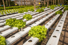 Hydroponics farm in greenhouse at Corofield, Thailand. Stock Photography