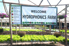 Hydroponics farm in greenhouse at Corofield, Thailand. Royalty Free Stock Images