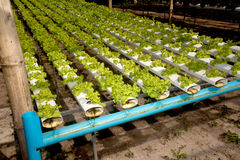 Hydroponics farm in greenhouse at Corofield, Thailand. Stock Image