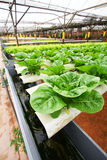 Hydroponics farming - Series 2 Royalty Free Stock Image