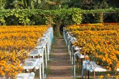 Hydroponics flower farm. Royalty Free Stock Photos