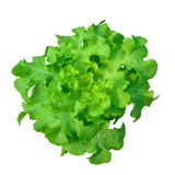 Hydroponics green vegetable isolate Royalty Free Stock Photos