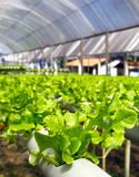 Hydroponics Royalty Free Stock Photos