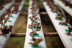 Hydroponics method of growing plants Stock Photos