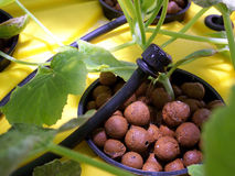 Hydroponics ou Driponics da alimentação superior foto de stock