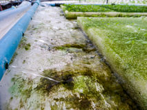 Hydroponics is a subset of hydroculture and is a method of growi Royalty Free Stock Images