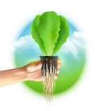 Hydroponics System Colored Poster Stock Image