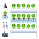 Hydroponics System Icon Set Stock Image