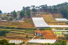 HYDROPONICS terraces farm Royalty Free Stock Image