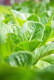 Hydroponics Vegetable Farm Stock Photography