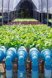 Hydroponics Vegetable Farm. In location Stock Photo