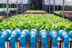 Hydroponics Vegetable. Farm in location Royalty Free Stock Photos