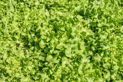 The hydroponics Stock Photo
