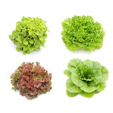 Hydroponics vegetables collection Stock Photo
