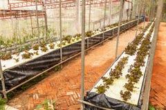 Hydroponics Vegetables Stock Photography