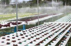 Hydroponikgemüse im grünen Haus Lizenzfreies Stockfoto