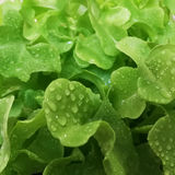 Hydroponiki jarzynowy czysty jedzenie jako tło Fotografia Royalty Free