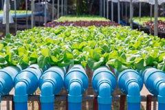 Hydroponiki warzywa gospodarstwo rolne Zdjęcia Royalty Free