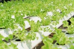 Hydroponiki warzywa gospodarstwo rolne Obraz Stock