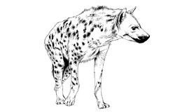Hyena που σύρεται στο μελάνι με το χέρι στοκ εικόνα με δικαίωμα ελεύθερης χρήσης
