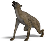 Hyena. Rendering of a hyena with clipping path and shadow oder white Stock Photos