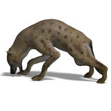 Hyena. Rendering of a hyena with clipping path and shadow oder white Royalty Free Stock Images