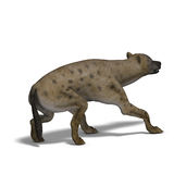 Hyena. Rendering of a hyena with clipping path and shadow oder white Stock Photography