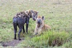 Hyena Royalty-vrije Stock Foto's