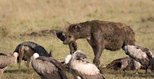 Hyena, buitres y chacal Fotografía de archivo