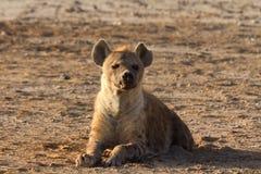 Hyena, Masai Mara Royalty Free Stock Photos