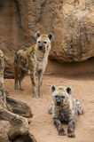 Hyena mother and cub Royalty Free Stock Photo
