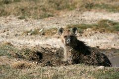 Hyena - Ngorongoro Krater, Tanzania, Afrika royalty-vrije stock afbeelding