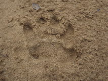Hyena paw print royalty free stock photos