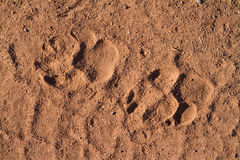 Hyena prints Stock Photo