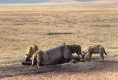 Hyena's royalty-vrije stock foto's