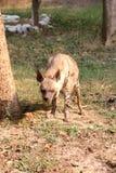 Hyena Royalty Free Stock Photography