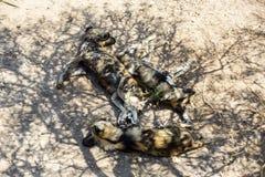 hyenas Στοκ φωτογραφίες με δικαίωμα ελεύθερης χρήσης